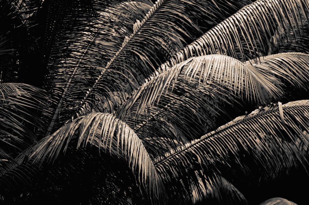 Végétation aux Seychelles