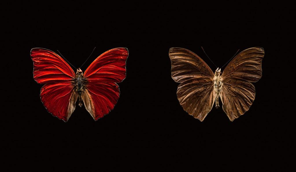 Photo papillons