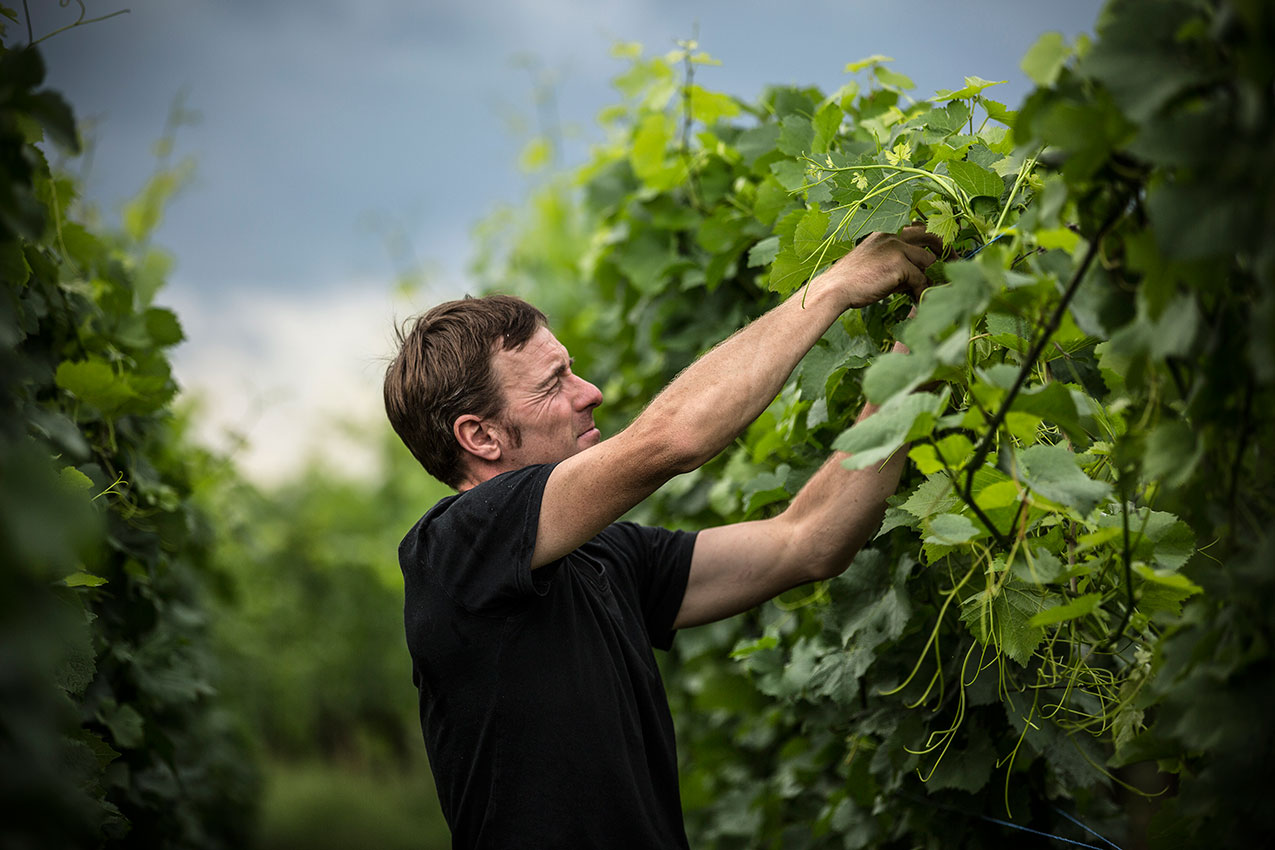 Laurent Barth dans ses vignes en Alsace
