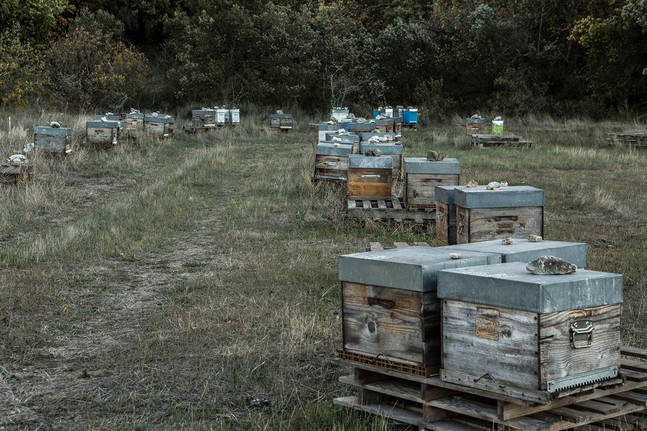 ruches dans le Luberon
