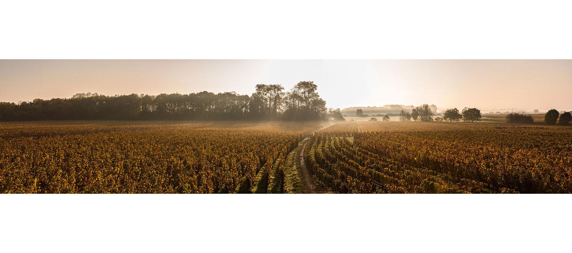 Vignes en Bourgogne en automne